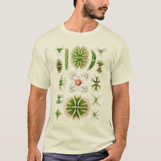 T-shirt Desmids