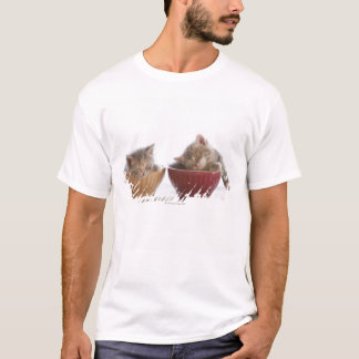 T-shirt Deux chatons dormant dans des cuvettes