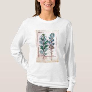 T-shirt Deux variétés d'Artemesia