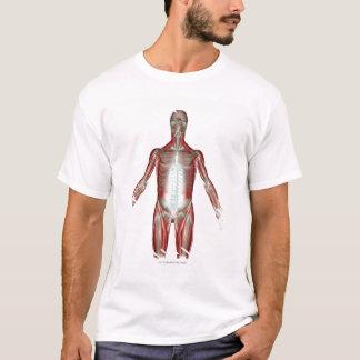 T-shirt Disposition de tous les muscles au corps humain