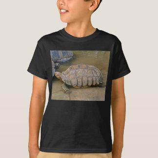 T-shirt DSC05748 pour betsy
