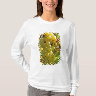 T-shirt Du Chasselas dans le vignoble - planté longtemps