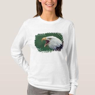 T-shirt Eagle chauve (leucocephalus de Haliaeetus)