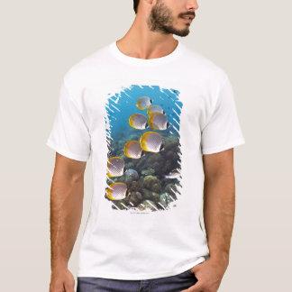 T-shirt École des poissons 2