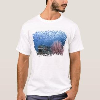 T-shirt École des poissons au-dessus du récif