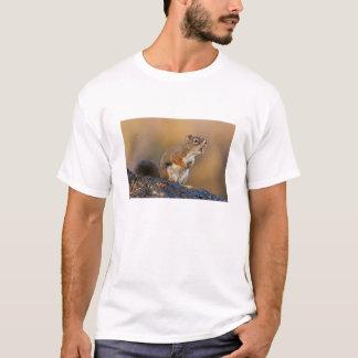 T-shirt Écureuil de chant