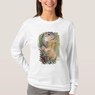 T-shirt Écureuil de Fox oriental, Sciurus Niger, adulte