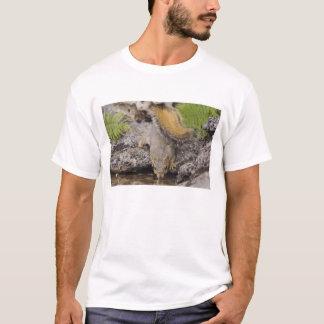 T-shirt Écureuil de Fox oriental, Sciurus Niger, adulte 2