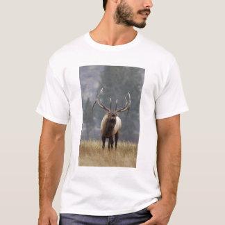 T-shirt Élans de Taureau bugling, Yellowstone NP, Wyoming
