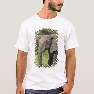 T-shirt Éléphant africain, masai Mara, Kenya. Loxodonta