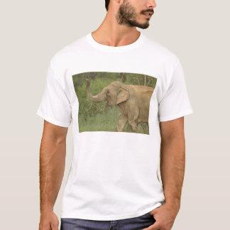 T-shirt Éléphant indien/asiatique communiquant, Corbett 2