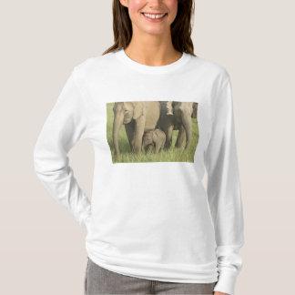 T-shirt Éléphants indiens/asiatiques et jeunes un, Corbett