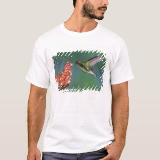 T-shirt émeraude Cuivreux-dirigée, cupreiceps d'Elvira,