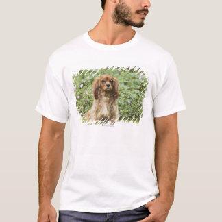 T-shirt Épagneul cavalier rouge du Roi Charles dans