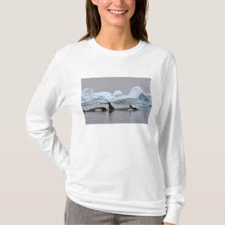T-shirt épaulards (orques), orque d'Orcinus, cosse