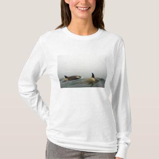 T-shirt épaulards (orques), orque d'Orcinus, cosse 2