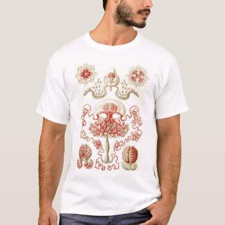 T-shirt Ernst Haeckel - méduses d'Anthomedusae