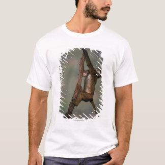 T-shirt Escalade olive de babouin (anubis de Papio) sur la