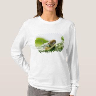 T-shirt Escargot de jardin sur le radis, la Californie
