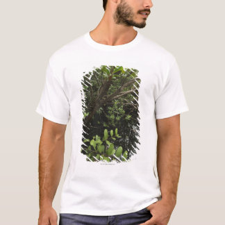 T-shirt Étang tropical de sel