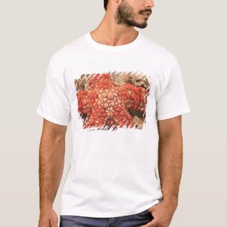 T-shirt étoile de mer, plongée à l'air chez Tukang