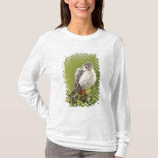 T-shirt Faucon pygméen se lissant dans un arbre