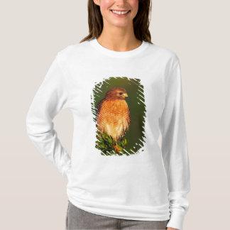 T-shirt faucon Rouge-épaulé (lineatus de Buteo) dedans tôt