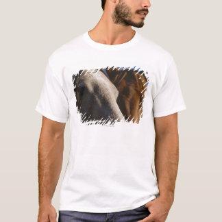 T-shirt Fermez-vous des chevaux