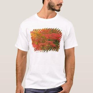T-shirt Feuillage d'automne japonais