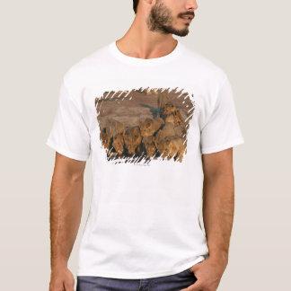 T-shirt Fierté du boire de lions