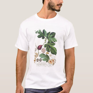T-shirt Figue, gravée par 1704-67) plats de Johann Jakob