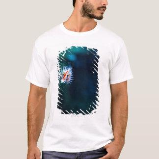 T-shirt Firefish de zèbre