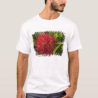 T-shirt Fleur de Pohutukawa, Dunedin