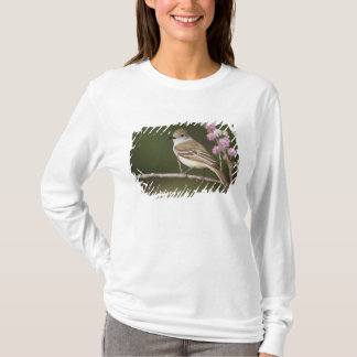 T-shirt FLYCATCHER Cendre-throated, Myiarchus