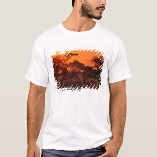T-shirt Forêt d'acacia silhouettée au coucher du soleil,