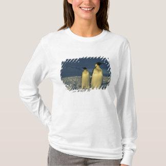T-shirt Forsteri de pingouins, d'Aptenodytes d'empereur),