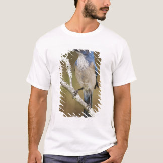 T-shirt Frotter-Geai occidental, californica d'Aphelocoma,