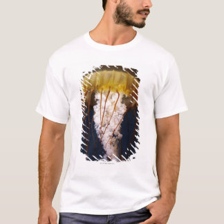 T-shirt Fuscescens de Chrysaora, ortie Pacifique de mer