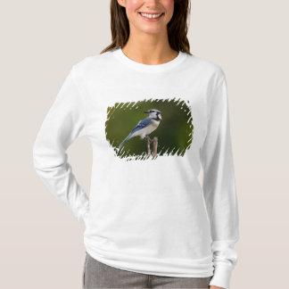 T-shirt Geai bleu, cristata de Cyaoncitta