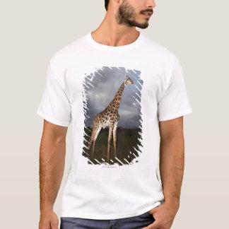 T-shirt Girafe (camelopardalis de Giraffa) dans dramatique