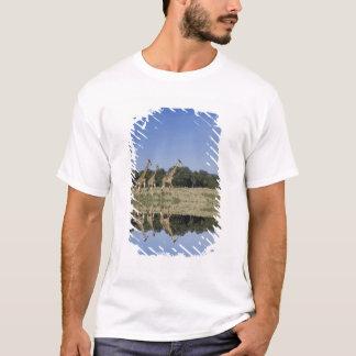 T-shirt Girafes de masai, camelopardalis de Giraffa,