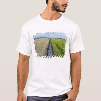 T-shirt gisements intermédiaires de riz de canal