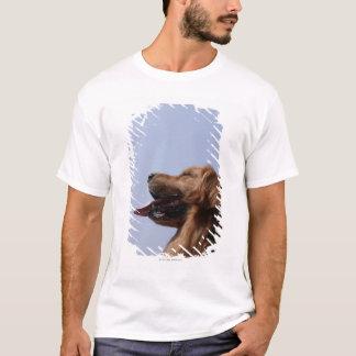 T-shirt Golden retriever 6