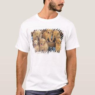 T-shirt Golden retriever ; est relativement un moderne et