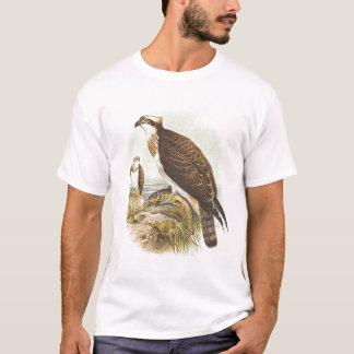 T-shirt Gould - balbuzard - haliaetus de Pandion