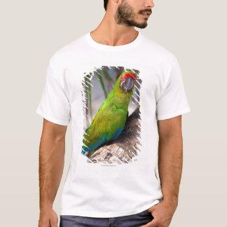 T-shirt Grand ara vert sur un arbre