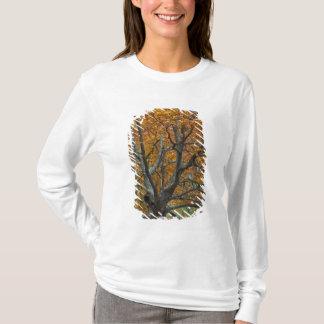 T-shirt Grand arbre d'érable en automne, lac bas, près de