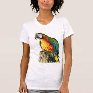 T-shirt Grand perroquet orange et turquoise sur un tronçon