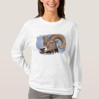 T-shirt grands moutons de klaxon, moutons de montagne,