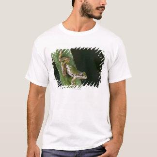 T-shirt Grenouille d'arbre Pacifique (regilla de